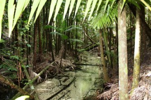 A091/Fraser Island/Ecosystem Wet Area on Sandy Island