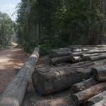 Logging thumbnail image